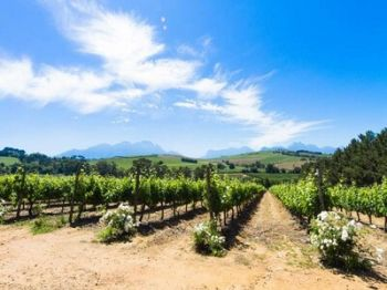 Photo for: A Winery Without A Vineyard
