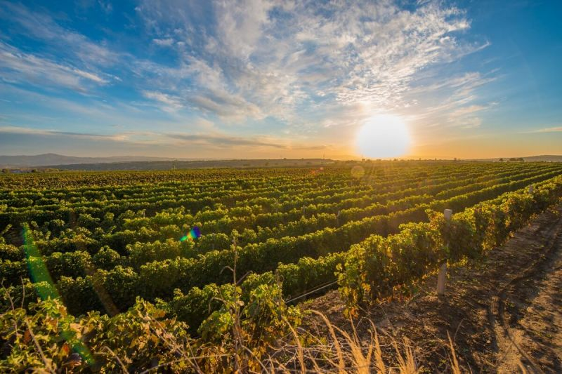 Photo for: The Vineyardless Vintner: The Benefits of Owning a Virtual Winery
