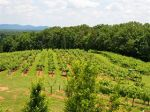 Photo for: Six East Tennessee Wineries Win at Two Major Wine Competitions