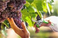 Photo for: Canadian wine is at a tipping point