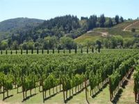 Photo for: Wine and other Horticulture Exports are Growing Strongly, Building to Impressive levels
