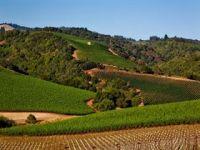 Photo for: Gallo Snaps Up Napa Vineyard