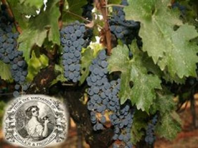 Photo for: Top California Winery Killed by Prohibition Is Reborn