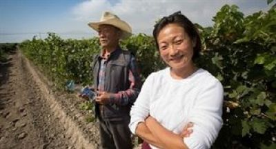 Photo for: China's wine pioneers up against climate, stereotypes