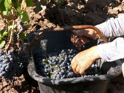 Photo for: How to Sell Limited Production Import Wine in the US Market