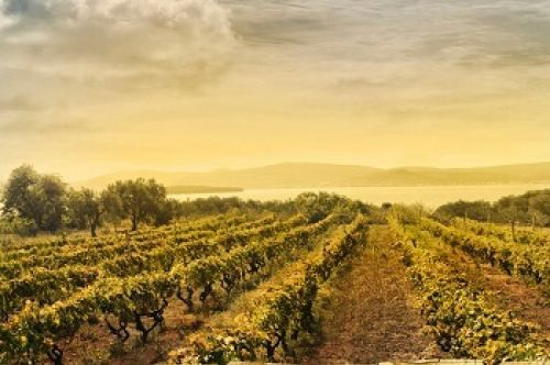 Photo for: 10 Tips for Wineries To Implement a Successful Digital Marketing Strategy