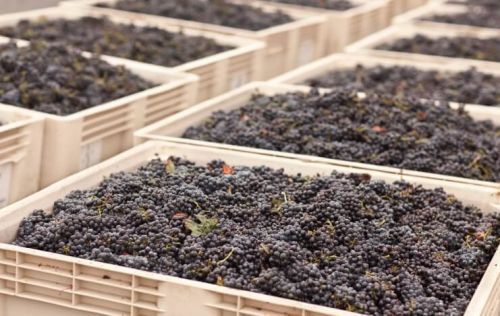 Photo for: 10 Factors That One Should Consider when Selecting a Bulk Wine Supply Partner