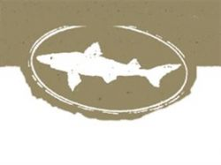 Photo for: Dogfish Head Adds Wood-aged Bitches Brew Stout to Year-round Lineup
